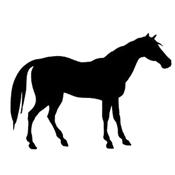 bit_horse